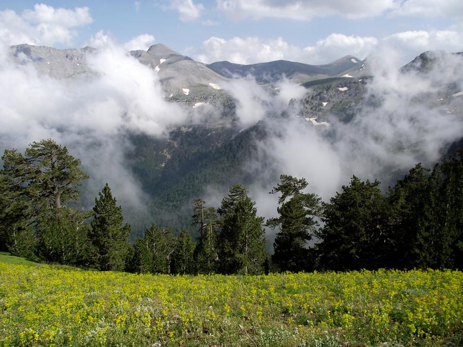 Альпийский луг на Олимпе